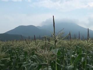 滝吉農園の嶽きみ